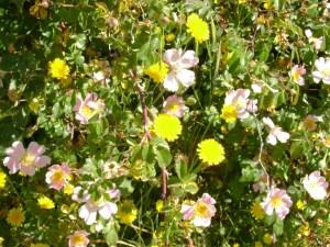 Muchas flores blancas y amarillas en medio de un campo verde