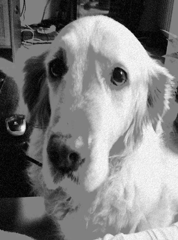 A veces los perros ponen cara de victimista