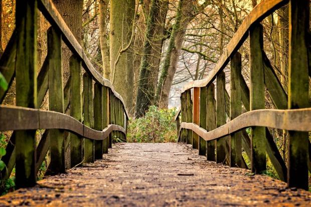 Un camino en un bosque que implica cruzar un puente