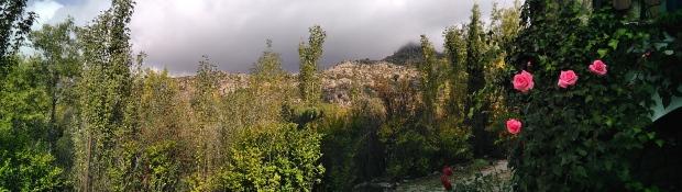 Árboles, montaña rocosa al fondo y rosas rosas en primer plano