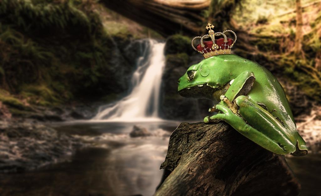Rana con corona de príncipe en una roca al lado de un río